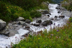 Slovakia mountains. Slovakia mountain river, plants and flowers Stock Photo