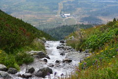 Slovakia mountains. Slovakia mountain river, plants and flowers Royalty Free Stock Image