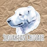 Slovakian Chuvach. Slovak cuvac dog breed with long fur digital art. Watercolor portrait close up of domesticated animal. Sticking out tongue, hand drawn doggy stock illustration