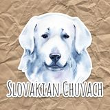 Slovakian Chuvach. Slovak cuvac dog breed with long fur digital art. Watercolor portrait close up of domesticated animal. Sticking out tongue, hand drawn doggy royalty free illustration