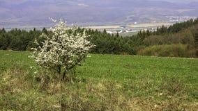 Slovakian krajobrazy Zdjęcie Stock
