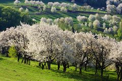 Slovakian landscape. Spring meadows and fields landscape in Slovakia. Blooming cherry trees. Awakening nature Royalty Free Stock Images