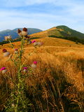 Slovakian Tatrzańskie góry Obrazy Royalty Free