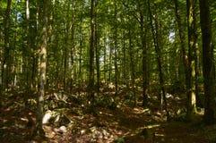 Sloveens bos Stock Afbeeldingen