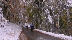 slovenië De herfst De weg door het bos stock videobeelden