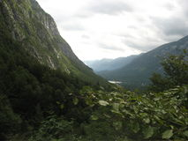Slovenië - vogel berg Stock Foto's