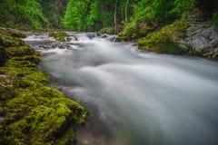 Slovenian gorge Stock Image