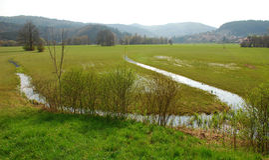 Slovenian Wetland Royalty Free Stock Photo