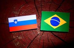 Slovensk flagga med den brasilianska flaggan på en isolerad trädstubbe Royaltyfri Bild