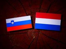Slovensk flagga med den holländska flaggan på en isolerad trädstubbe Arkivbilder