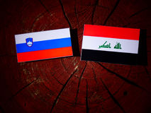 Slovensk flagga med den irakiska flaggan på en isolerad trädstubbe Royaltyfri Fotografi