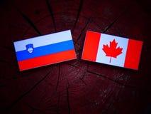 Slovensk flagga med den kanadensiska flaggan på en isolerad trädstubbe Royaltyfria Bilder