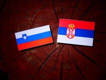 Slovensk flagga med den serbiska flaggan på en isolerad trädstubbe Royaltyfri Fotografi