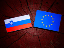 Slovensk flagga med EU-flaggan på en isolerad trädstubbe Royaltyfri Fotografi
