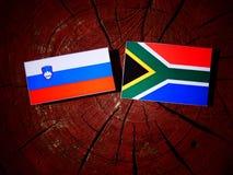 Slovensk flagga med söder - afrikansk flagga på en isolerad trädstubbe Fotografering för Bildbyråer