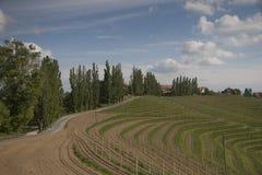 Slovenske Gorice Landscape with vineyards, road and forest. Beautiful landscape in Slovenske Gorice in Slovenia. Green vineyards, narrow road, trees and forest Royalty Free Stock Images