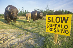 Slow Buffalo Crossing sign Royalty Free Stock Images