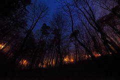 Slow burn forest fire at night Royalty Free Stock Photo