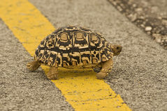 Slow crossing Stock Photo