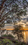 Sunset, Tug Boat, and Trees from Cliff Royalty Free Stock Photography
