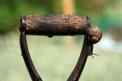 Slow decent. A common garden snail slowly decending from the handle of a wet garden fork Stock Images