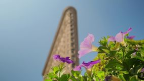 Slow Dollying Shot of Tall Large City Skyscraper. A slow dollying shot of flowers with a tall large city skyscraper defocused in the background stock footage