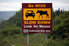 Slow Down. Road sign warning of the dangers of Moose vs. Car accidents in Newfoundland Royalty Free Stock Photography