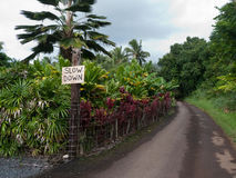 Slow down sign on narrow road. Typical Maui narrow road with Slow Down sign reflecting the attitude of the locals about life in general. Beautiful tropical Royalty Free Stock Photos