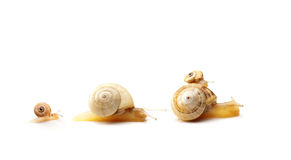 Slow family. Four snails representing family concept Royalty Free Stock Photography