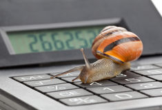 Slow finance. Snail on calculator over white background - slow business or finance concept stock photography
