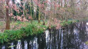 Slow flowing river along the bank with tree reflections in the water. Slow flowing stream along the water embankment with a tree and autumnal leaves reflecting stock footage