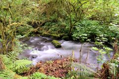 A slow flowing stream Stock Photography