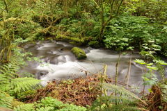 A slow flowing stream Stock Photos