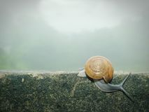 Slow Life. Stock Images
