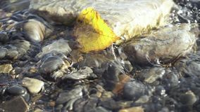Slow motion autumn leaf in a transparent stream. Slow motion one yellow autumn leaf in a transparent stream of mountain water between the stones stock footage