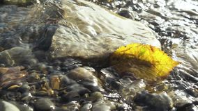 Slow motion autumn leaf in a water stream. Slow motion yellow autumn leaf in the water flow between the stones at the bottom under the sunlight stock video footage