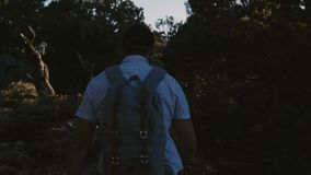 Slow motion background shot, happy active young male tourist hiking with backpack among beautiful summer sunset forest. stock footage