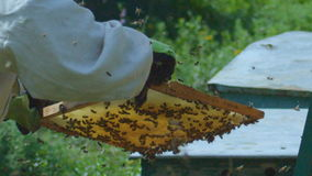Slow Motion Beekeeper Takes out Honeycombs Full Honey Bees stock video