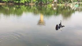 Slow motion bird Flight stock footage