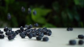 Slow motion, blueberry falls on a white table and crumbles on it. Beautiful frame with green plants in the background.  stock video footage