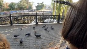 SLOW MOTION. A child in a park feeding pigeons stock footage