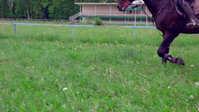 SLOW MOTION CLOSE UP:  A dark brown strong stallion moves trotting at the training area. A rider girl sits on top of a horse. Cloudy summer day stock video footage