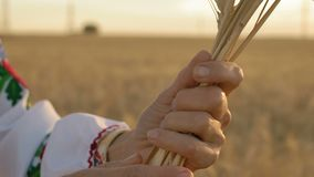 Slow Motion, Close-up, Hands Women Rotate Around Wheat Spike In the morning on the Field