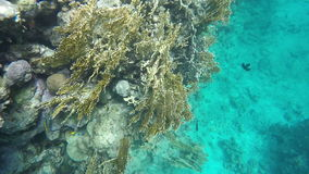 Slow motion. Coral reefs. You can see a variety of fish. Coral reefs. You can see a variety of fish. Video in a slowed fourfold. Slow motion stock footage