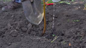 In slow motion, the farmer planted a new tree in his garden stock video