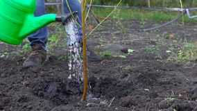 In slow motion, the farmer watering new tree in his garden.  stock footage
