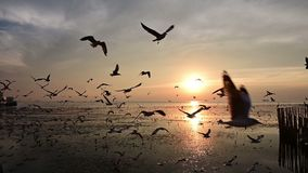 Slow motion of flying silhouetted seagull on the beach stock video footage