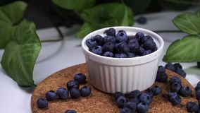Delicious blueberries falling in white bowl. cinematic view with green plants in the background. Slow motion footage, delicious blueberries falling in white bowl stock video footage