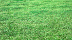 Slow motion of grass, windy day stock footage