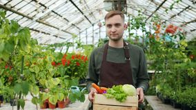 Slow motion of handsome man walking in greenhouse holding box of organic food. Slow motion of handsome man in apron walking in greenhouse holding wooden box of stock video